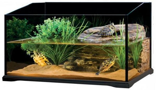 akvarium-dlja-krasnouhih-cherepah