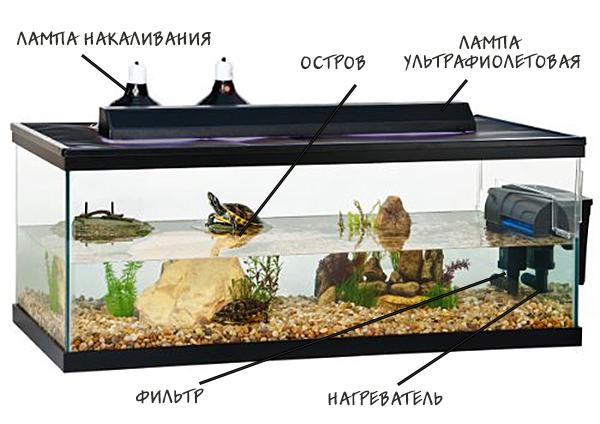 akvarium-dlya-cherepahi