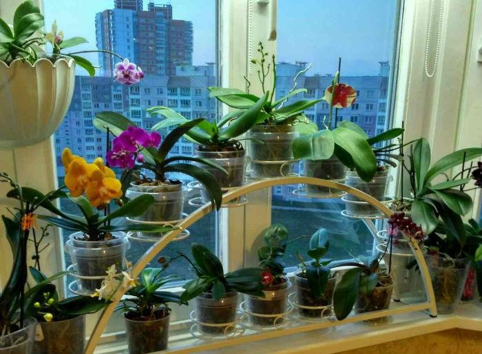 decorativnaja-vitrina