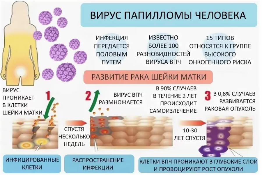 virus-papillomy-cheloveka