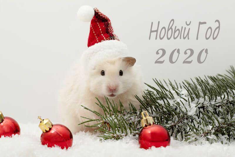 novyj-2020-god-krysy-1